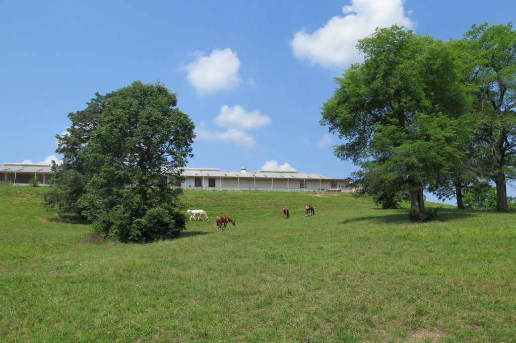 During their downtime, the mounted unit's horses enjoy the pasture behind their home at the Ellington Agricultural Center.