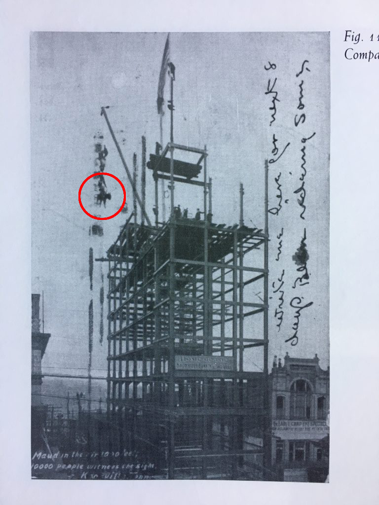 cow being lifted onto scaffolding for building with crane