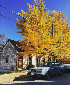 trees in front of cityhouse in fall