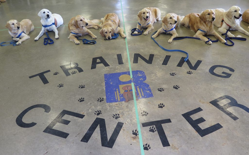 group of dogs with training center logo