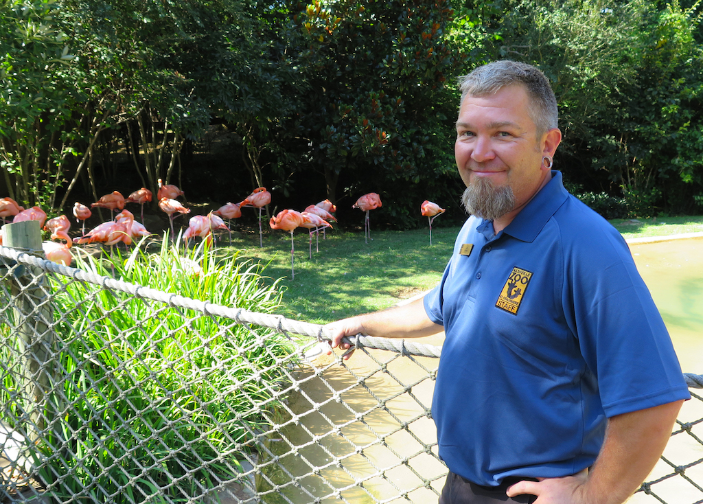 J.G. Auman poses with the Nashville Zoo's flock of flamingoes in their enclosure.