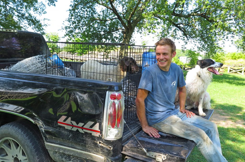 zach richardson of nashville chew crew with sheep on pickup truck bed